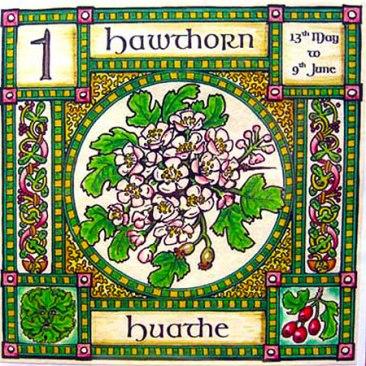 blog_歐甘樹文-歐瓦姆字母-Ogham-凱爾特樹曆-12-山楂月-HAWTHORN