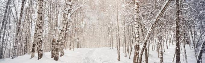 0432bedc9c28ce81bdb4ae3ae4cfe795_vacanze-in-inverno-con-bambini-per-sciare-sulle-dolomiti-val-di-fassa-1170-360-c