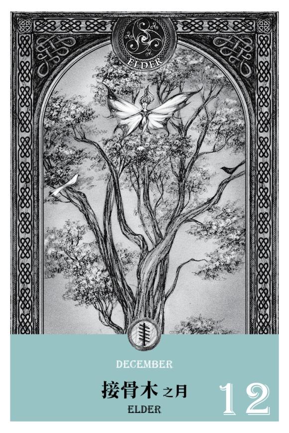 2016魔法手帳-接骨木