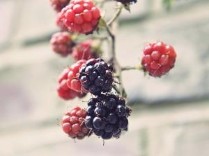 blackberries-907395_960_720
