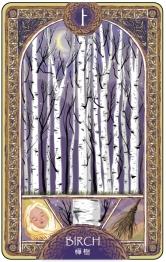 歐甘樹卡 (1) 樺樹