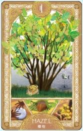 歐甘樹卡 (9) 榛樹